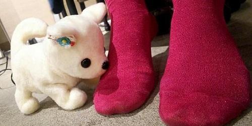 Hana-chan sedang mengendus kaki untuk mendeteksi bau.(Daily Mail)