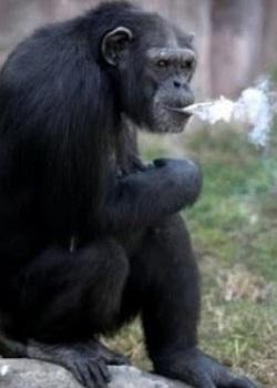 Azalea saat merokok.(bbs)