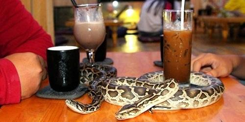 Yokohama Subtropical Tea House Retile. (tokyotimes.com)