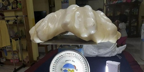 Mutiara raksasa seberat 34 kg.(cnnindonesia.com)