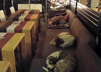Kafe untuk anjing.(intisari-online.com)