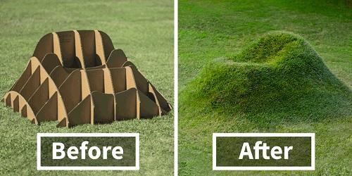 Terra Grass yang unik.(Bored Panda)