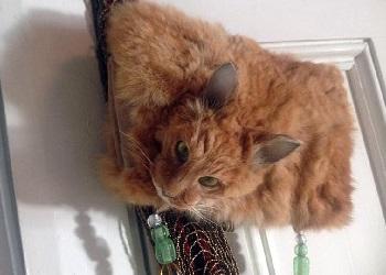 Tas dari kepala kucing asli.(mirror.co.uk)
