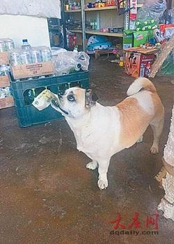 Anjing cerdas tengah berbelanja.(en.people.cn)