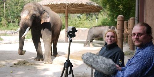 Koshik, gajah.(Scientific American)