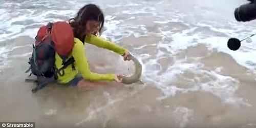 Saat sedang berfoto bareng hiu.(dailymail.co.uk)