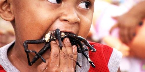 Seorang bocah mencicipi kuliner tarantula.(YouTube)