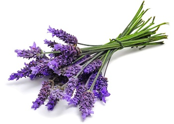 Lavender.(bbs)