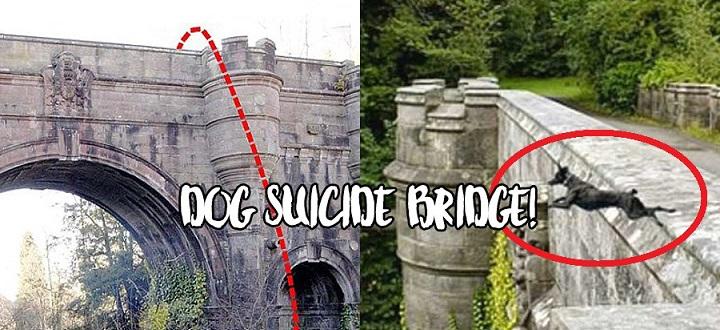 Jembatan Overtoun di Skotlandia Jadi Lokasi Favorit Anjing untuk Bunuh Diri | Kabar6.com